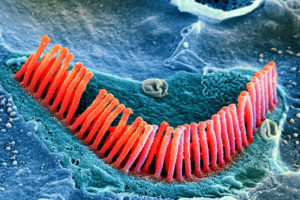 hair cells produce from stem cells, maurya foundation
